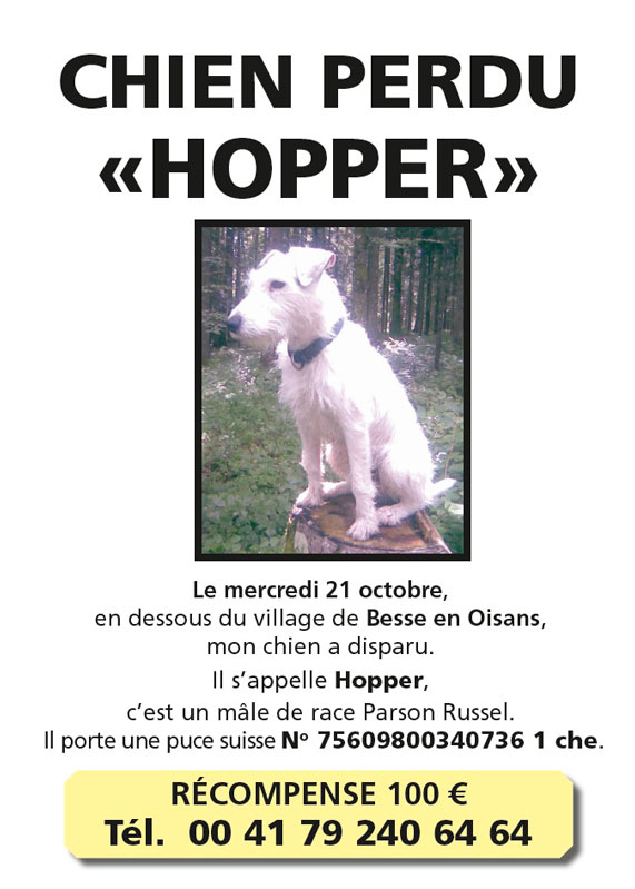 Hopper, chien perdu