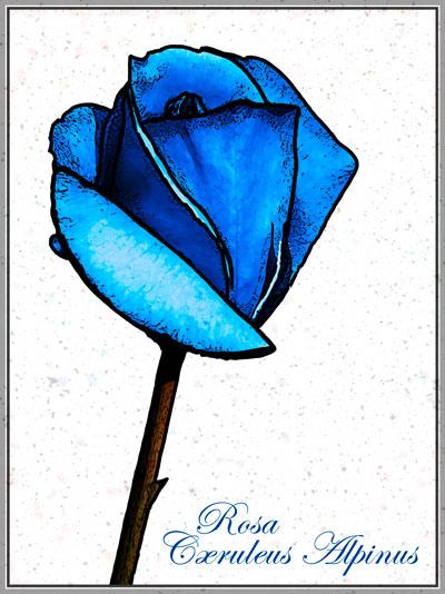 Rose-Bleue