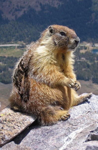 Marmottepublicitaire
